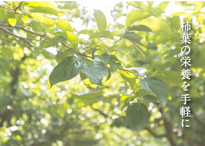 柿の葉茶 KAKIHA